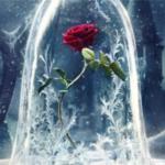Los beneficios esotéricos de las Rosas.