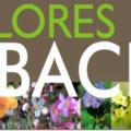 Flores de Bach y Tarot