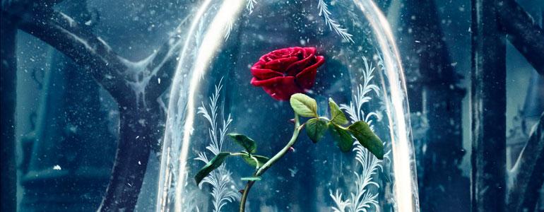 Beneficios esotéricos de las rosas